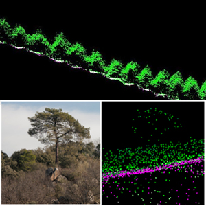 II Edición Puesta en Valor de datos LIDAR PNOA para aplicaciones forestales en QGIS